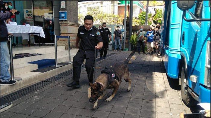 Kisah Baru & Tara, Anjing Pelacak BNNP Bali yang Pernah Ungkap Kasus Penyelundupan 8 Kilogram Ganja