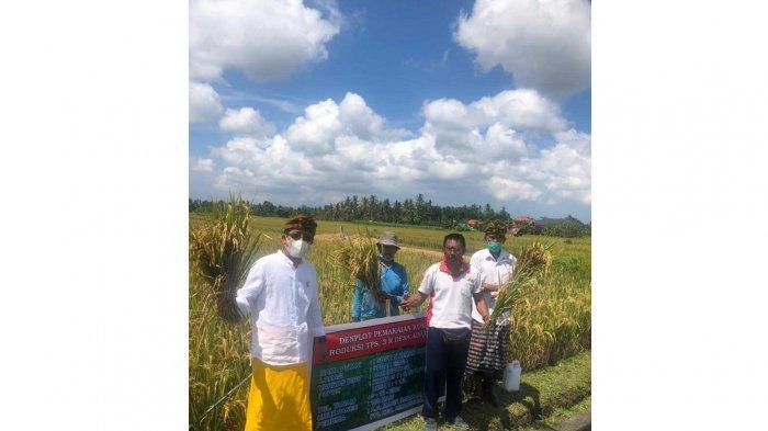 Pengolahan Sampah Jadi Pupuk di Desa Adat Bindu Badung Bali, Dimanfaatkan Subak Setempat