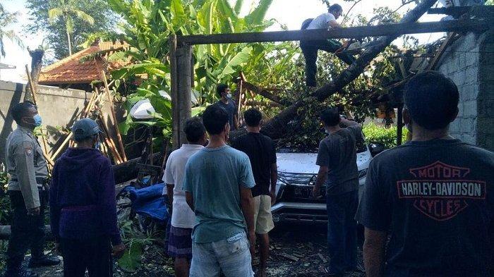 Cuaca Ekstrem, Pohon Bayur Tumbang Timpa Mobil Warga di Villa Belong Mengwi Bali