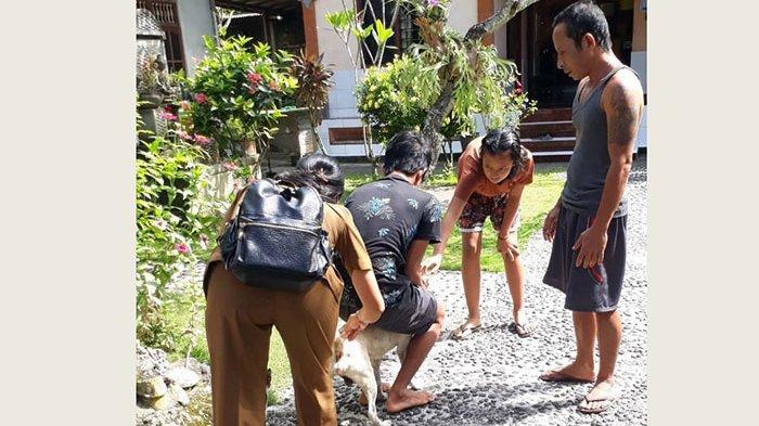 UPDATE Serangan Anjing Rabies di Desa Tihingan Klungkung, 7 Warga Terima VAR, 3 Anjing Dieliminasi