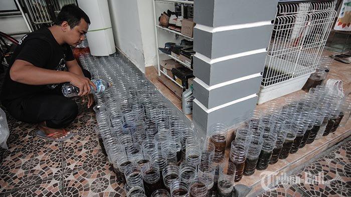 Damar, seorang peternak dan penjual ikan cupangmemberikan pakan ikan cupang di rumahnya jalan Gunung Batukaru, Denpasar, Minggu (20/12/2020). Di tengah pandemi, bisnis ikan cupang menjadi tren dan populer di masyarakat.