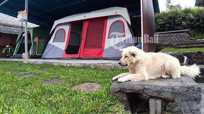 Penginapan berbentuk tenda yang bisa dijadikan alternatif ketika cuaca tidak mendukung di BlacLava Hostel, Kintamani, Bangli, Sabtu (13/4/2019).