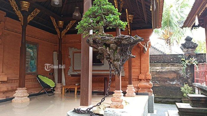 VIRAL Bonsai Avatar Ciptaan Warga Mengwi Badung, Bonsai Terbang Seolah Melawan Gravitasi
