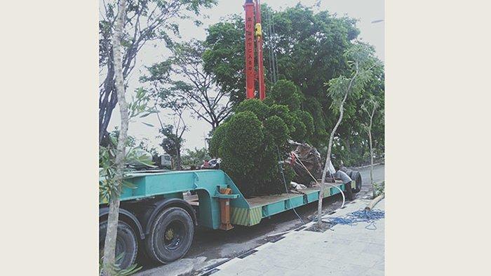 Dinilai sebagai Aset, Pasar Umum Gianyar Akan Dihiasi 9 Bonsai yang Didatangkan dari Jawa Timur