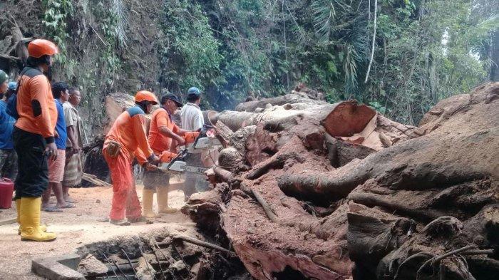 Pohon Tumbang di Dusun Bunut Madya Bangli, Hancurkan Bak Penampungan Air