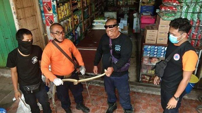 Bukan Kobra, Ular Masuk Toko Sembako di Pasar Badung Ternyata Ular Sowo Kopi, Begini Kondisinya