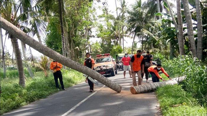 Angin Berhembus Kencang Beberapa Menit, 1 Pohon Kelapa Tumbang Tutup Jalan di Blahbatuh Gianyar Bali