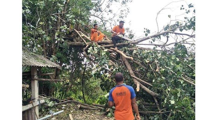 Terkait Potensi Pohon Tumbang di Musim Angin Kencang,BPBD Gianyar Minta Perbekel Segera Bersurat