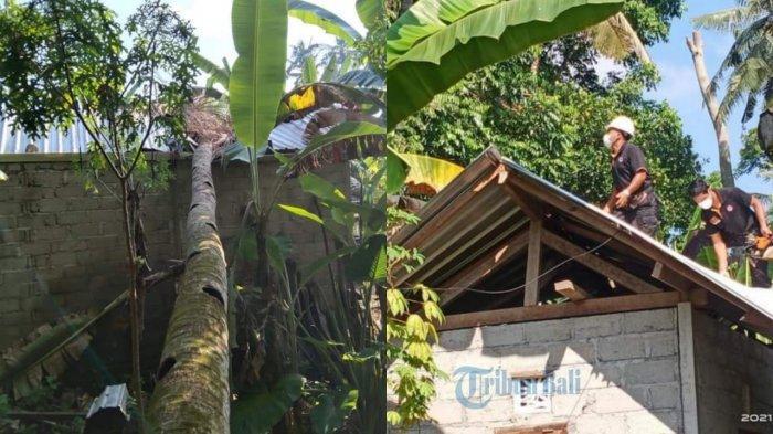 Pohon Kelapa Timpa Dapur dan Kamar Mandi Milik Sumadi di Karangasem, Kerugian Sekitar Rp 7 Juta