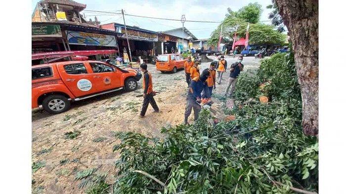 Antisipasi Siklon Tropis Seroja, BPBD Pangkas Pohon Rawan Tumbang di Klungkung Bali