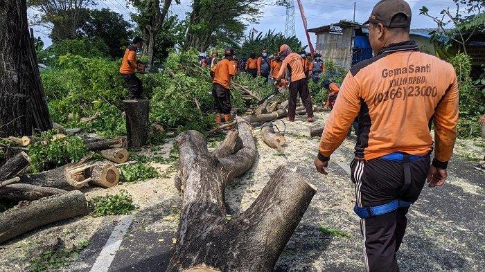 Pohon Perindang Tumbang di Jalan Raya Tojan Klungkung Timpa Warung Batu Sikat
