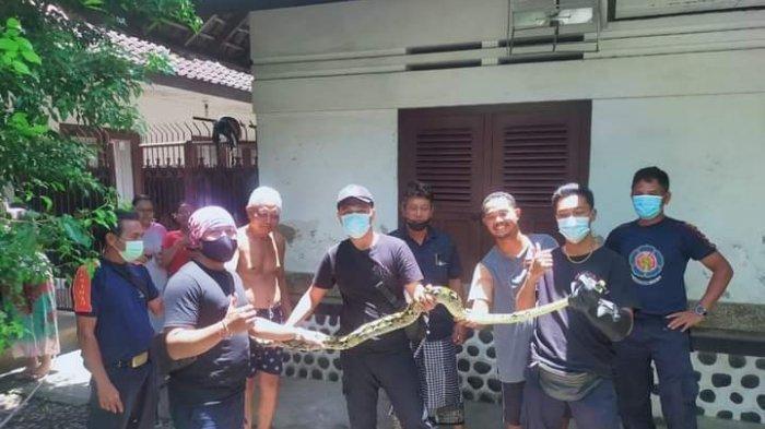 BPBD Denpasar Tangani 21 Kejadian Saat Nyepi, Ular Sanca 3 Meter Masuk Rumah Warga di Denpasar