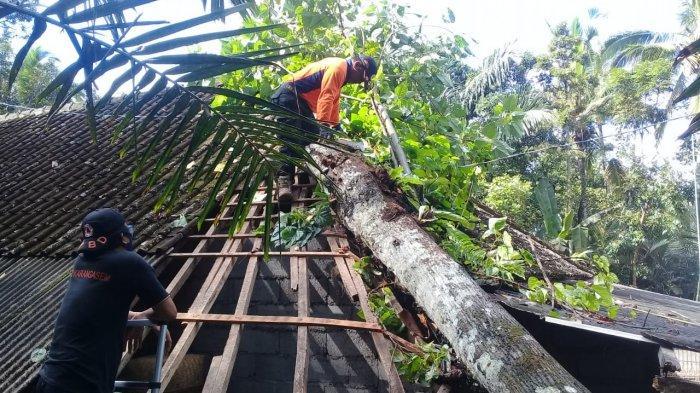 Pohon Bintenu Tumbang Timpa Rumah Warga di Griya Kangin Karangasem