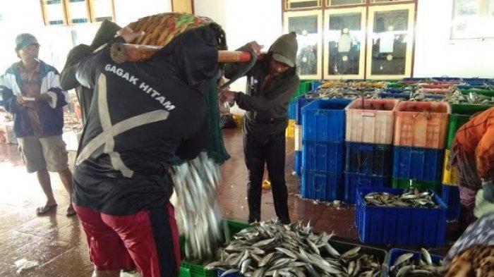 Nelayan di Pengambengan Jembrana Menjerit, Harga Ikan Lemuru Anjlok