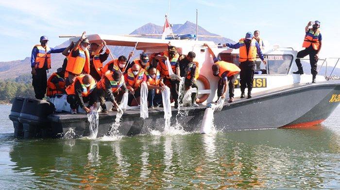150 Ribu Benih Ikan Ditebar di Danau Batur Bangli