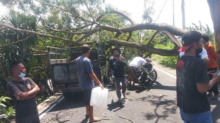 Dahan Pohon Patah di Jalan Raya Tojan Klungkung Timpa Mobil yang Melintas