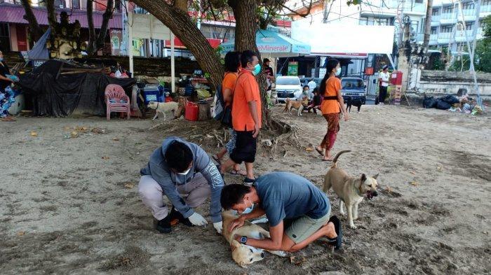 Antisipasi Rabies, Anjing Liar di Badung Bali Kini Mulai Divaksin