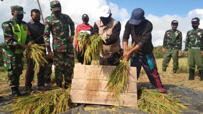 Mampu Tingkatkan Produksi, Dinas PKP Bangli Kembali Sosialisasikan Penggunaan Pupuk Berimbang