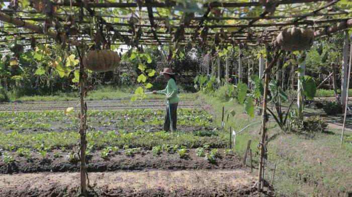 Bangkitkan Sektor Pertanian Sayuran Organik di Pulau Dewata, Begini Cara Marketing Eko Martono