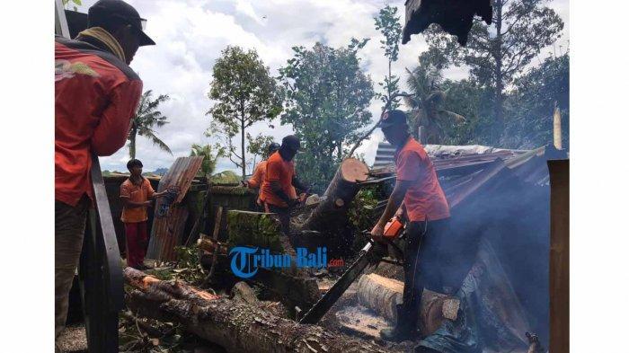 BPBD Gianyar Minta Warga Tak Segan Minta Bantuan Pangkas Pohon