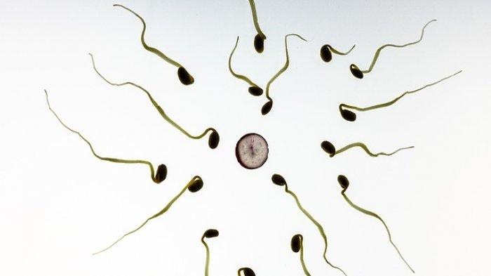 Pendonor Sperma Terancam 5 Tahun Penjara, Lho Kok Bisa?