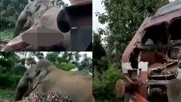 Viral Video Gajah vs Kereta Api, Detik-detik Gajah Seret Tubuh Sendiri yang Penuh Luka Keluar Rel