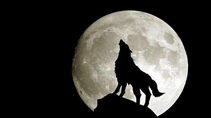 Ini Reaksi Binatang Saat Terjadi Gerhana Bulan, Lebih Agresif?