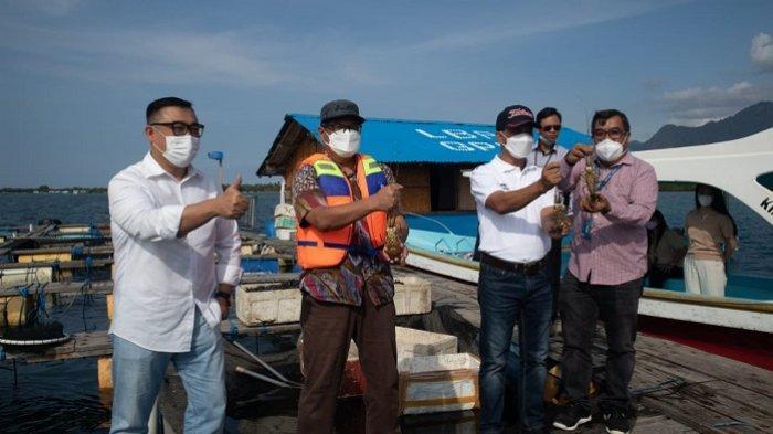 Pilar Baru Pulihkan Ekonomi, OJK Matching KUR Budidaya Lobster dengan GPLI