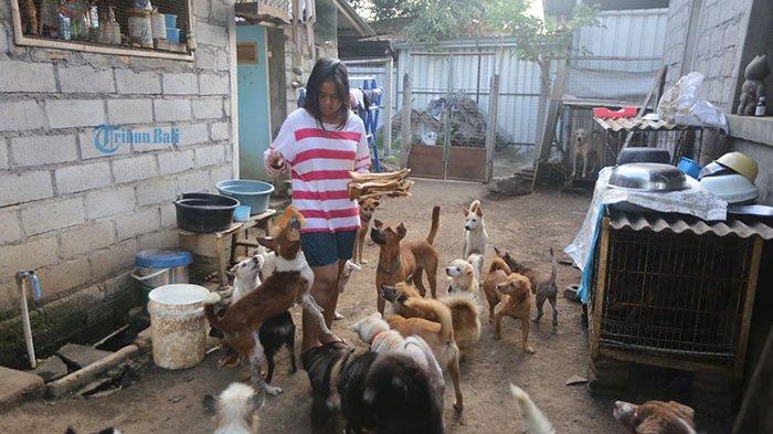 Siswi Ini Rela Pakai Tabungan Sendiri untuk Beli Pakan 50 Anjing yang Dia Selamatkan