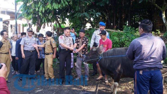 Kapolres Badung Serahkan Sapi Seberat 450 Kg untuk Kurban di Masjid Baiturrahman