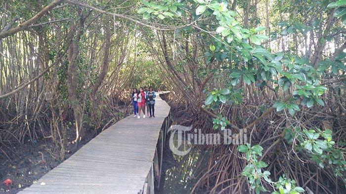Wisata Ke Wisata Hutan Mangrove
