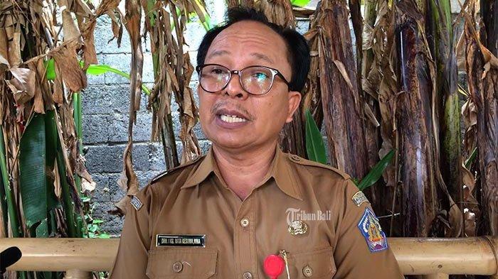 Babi Mati di Bungkulan dan Sayan Bergelombang dalam 2 Minggu,Distan Bali Nyatakan Tak Mengarah ASF