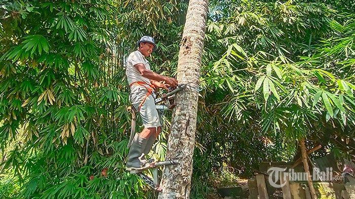 KREATIF! Warga Tabanan Ini Ciptakan Alat Bantu Panjat Pohon hingga Pemotong Pandan dari Barang Bekas