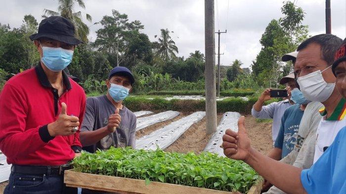Cegah Harga Cabai Meroket, Dinas Pertanian dan Pangan Badung Salurkan 160 Ribu Bibit Cabai ke Petani