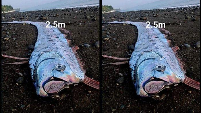Warga Heboh Penemuan Ikan Aneh di Pesisir Pantai Tianyar Barat Karangasem
