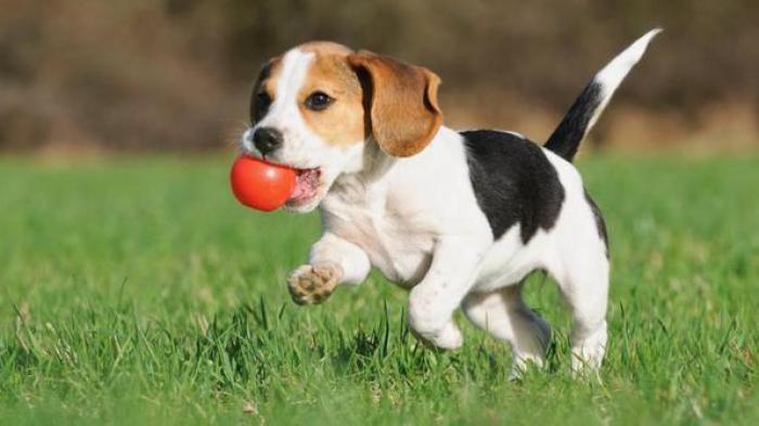 Arti Mimpi Menemukan Anjing, Ternyata Tidak Selalu Pertanda Baik
