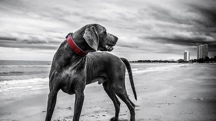 11 Mimpi Anjing yang Sering Dialami, Mimpi Digigit Anjing Bisa Jadi Merasa Dikhianati