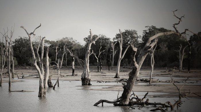 5 Arti Mimpi Tentang Banjir, Mimpi Banjir Lumpur atau Sampah Menggambarkan Kekecewaan