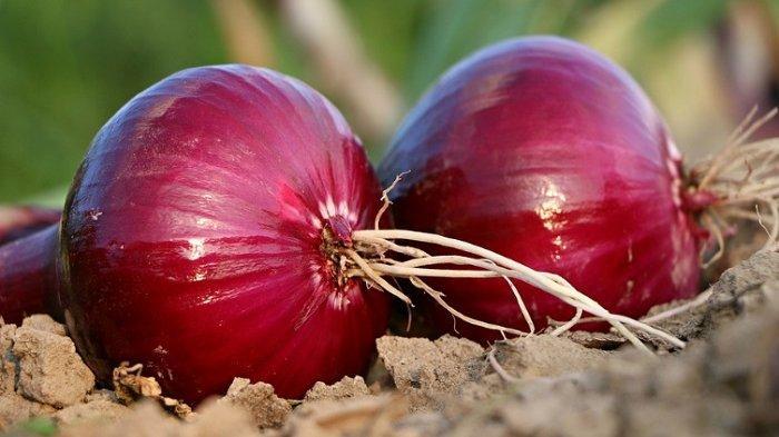 Ini 5 Manfaat Bawang Merah Buat Kecantikan Kulit Anda, Bikin Kulit Makin Glowing!