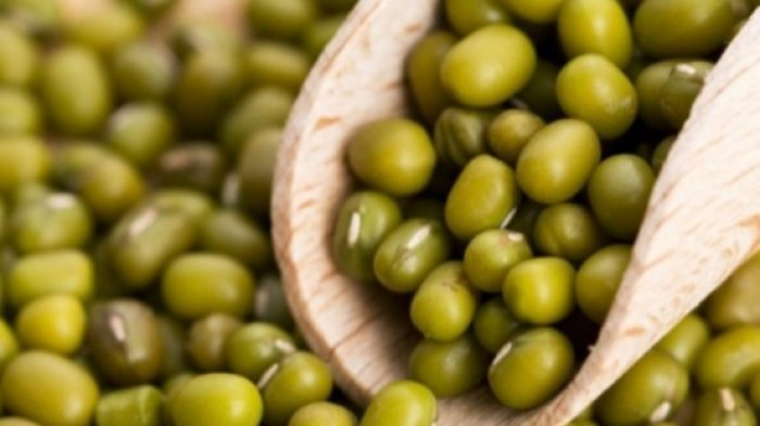Ilustrasi kacang hijau