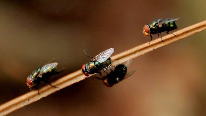 8 Pertanyaan Ini Receh tapi Penting, Mengapa Lalat Tak Menemukan Jendela yang Terbuka?