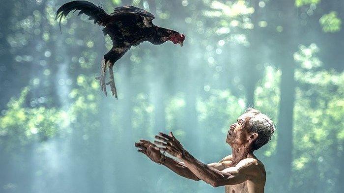 4 Arti Mimpi Menangkap Ayam, Mendapatkan Kedudukan Tinggi, Tapi Juga Pertanda Butuh Pertolongan