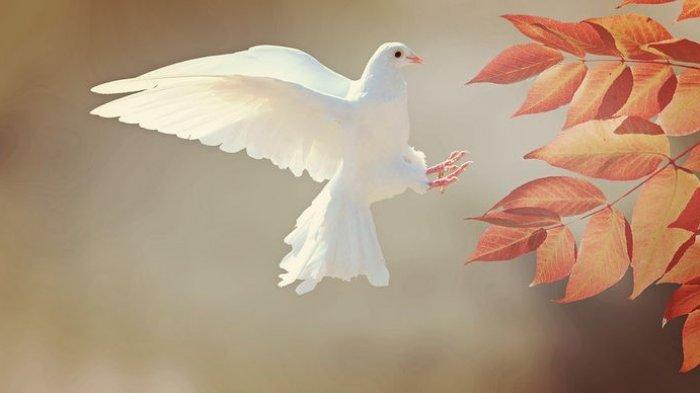 Ini Arti Mimpi Tentang Burung, Mimpi Burung Merpati Akan Mendapat Rezeki Nomplok dan Karier Bersinar