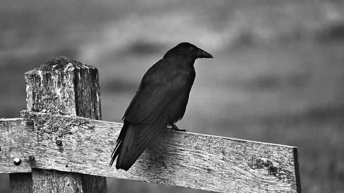 Mitos Suara Burung di Malam Hari, Sering Dipercaya Ada Orang Meninggal Hingga Datangnya Musibah