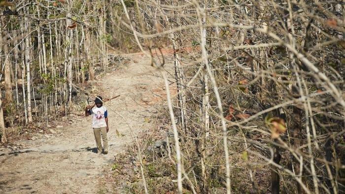 BMKG Minta Pemda Antisipasi, Puncak Musim Kemarau di Bali Agustus 2021