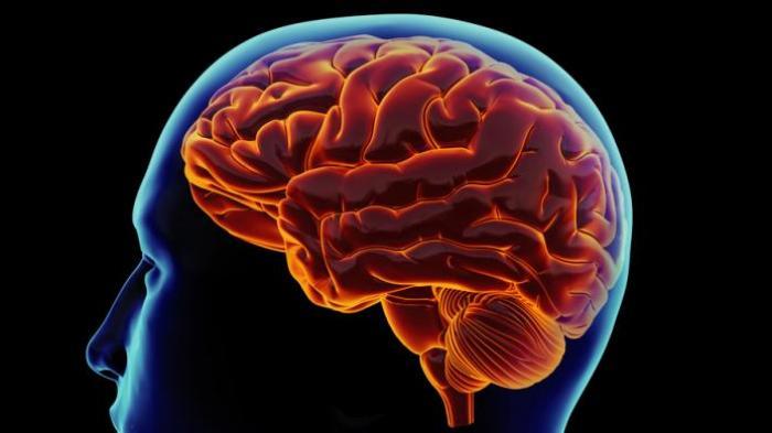 Kepala Pusing dan Mudah Mengantuk saat Diajak Ngobrol, Waspadai Gejala Radang Otak