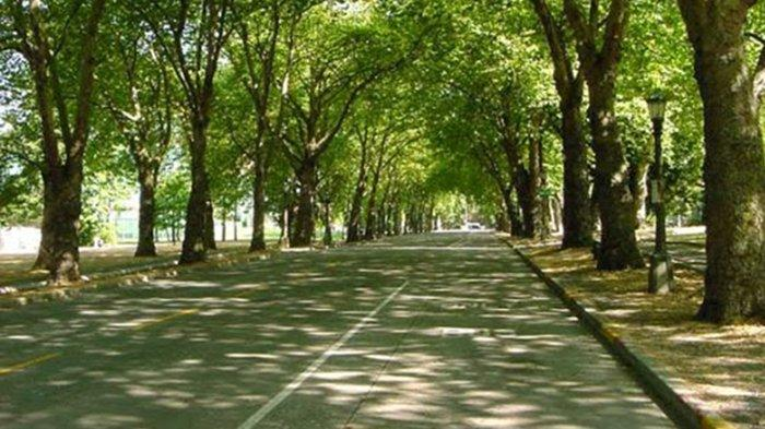 Sejumlah Wilayah di Karangasem Akan Dijadikan Perkebunan Pohon Kapas,Disiapkan Lahan Ratusan Hektare