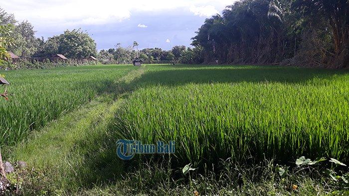 Fraksi Golkar DPRD Bali Minta Anggaran Sektor Pertanian Dinaikkan Minimal 5 Persen dari APBD