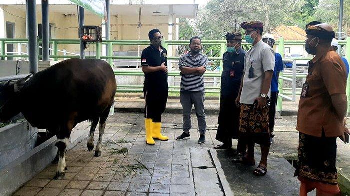 Dinas Pertanian dan Pangan Badung Lakukan Pemeriksaan terhadap Hewan yang Akan Dijadikan Kurban