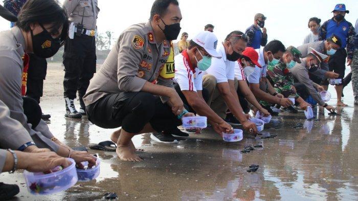 Lestarikan Satwa Laut, Kapolres Badung Melepas Ratusan Tukik & Berbagi Sembako di Pantai Petitenget